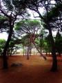 Целующиеся деревья