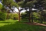 Солнечные лужайки парка