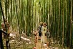 Парк приключений – бамбуковая роща