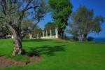 Айвазовское - оливковая роща