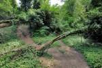 Волшебный лес Ильяс-Каи