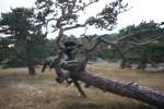Загадочный лес Красного Камня