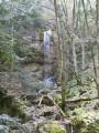 Тисовая роща вокруг водопада