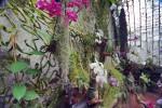 Выставка тропических орхидей