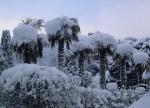 Никитский сад зимой