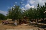 Черешневый сад возле фермы